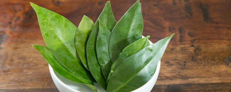 Macia e suave, planta ora-pro-nóbis combina com frutos do mar, caldos e saladas