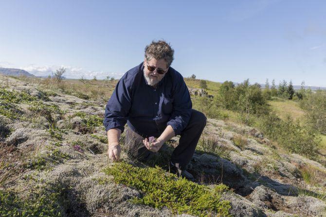 Jon Sigfusson colhendo ervas na Islândia. Foto: Bara Kristinsdottir/The New York Times