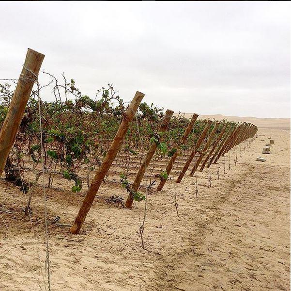 Bdega Del Rey produz vinho a partir de vinhas cultivadas no deserto de Piracas. Foto: Reprodução/Instagram.