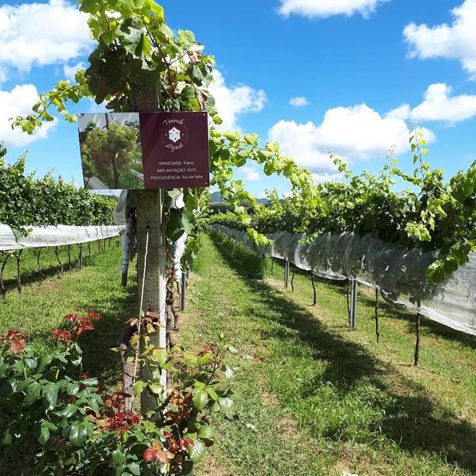 Legado, em Campo Largo, é uma das vinícolas que cultivam suas próprias uvas. Foto: Divulgação.