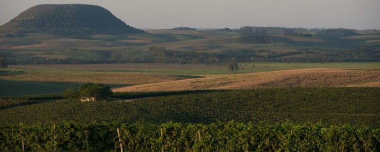Região do Rio Grande do Sul tem tudo para ter o melhor vinho do Brasil