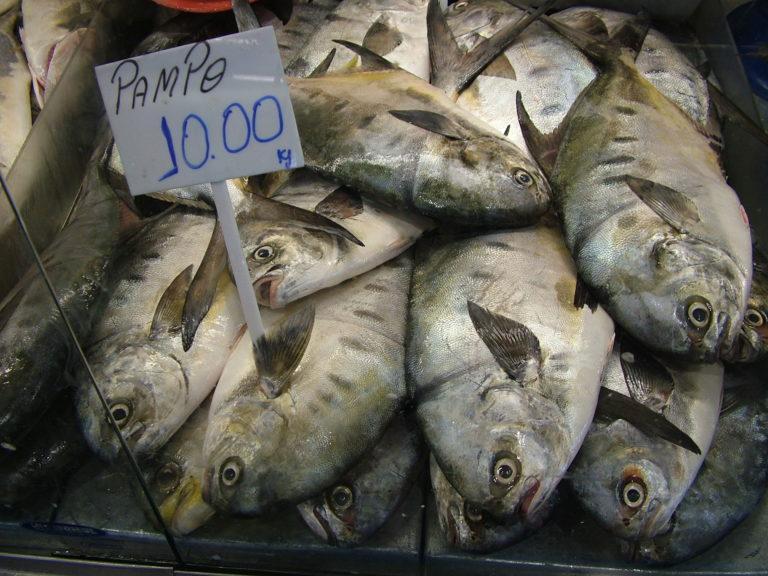 SC tem 130 espécies de peixes, mas o salmão é o mais pedido nos restaurantes