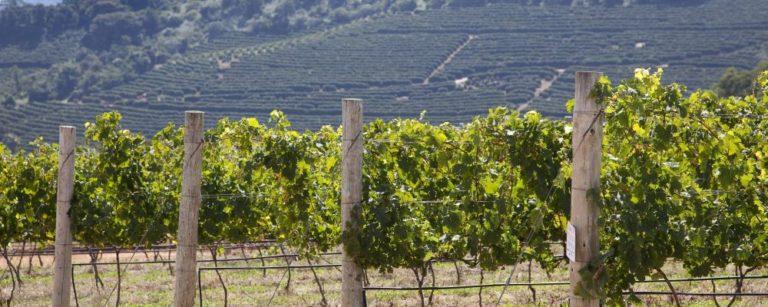 vinícola guaspari - foto divulgação