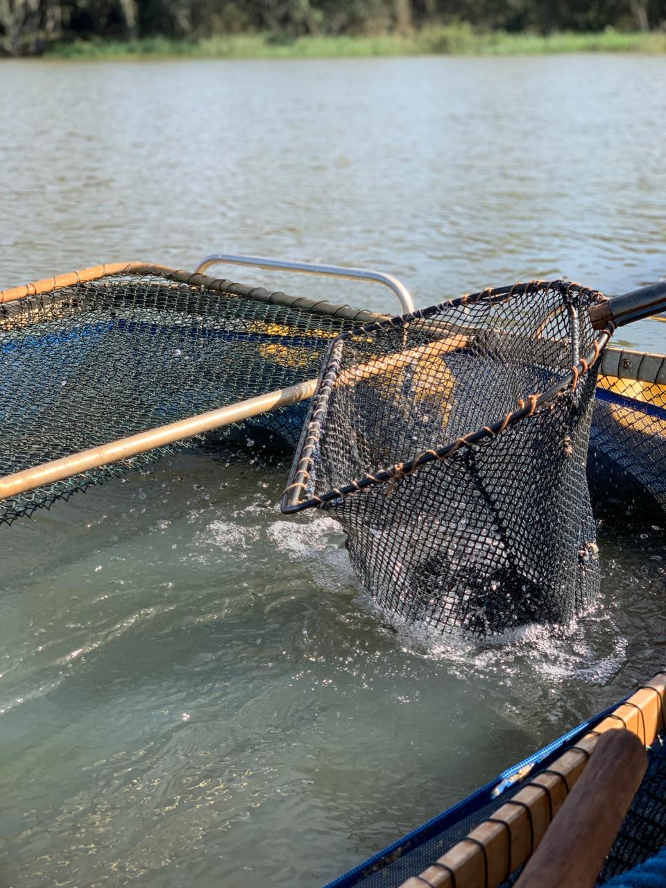 Criação de pacu feita por pescadores da região do Lago Itaipu. Foto: Claudia Krauspenhar / arquivo pessoal.