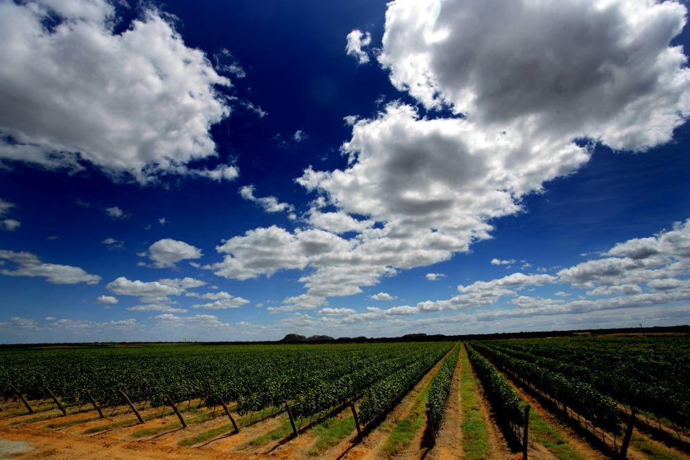 A vinícola no meio do sertão nordestino produz mais de 2,5 milhões de litros por ano de espumante, vinho, brandy e suco de uva. Foto: divulgação.