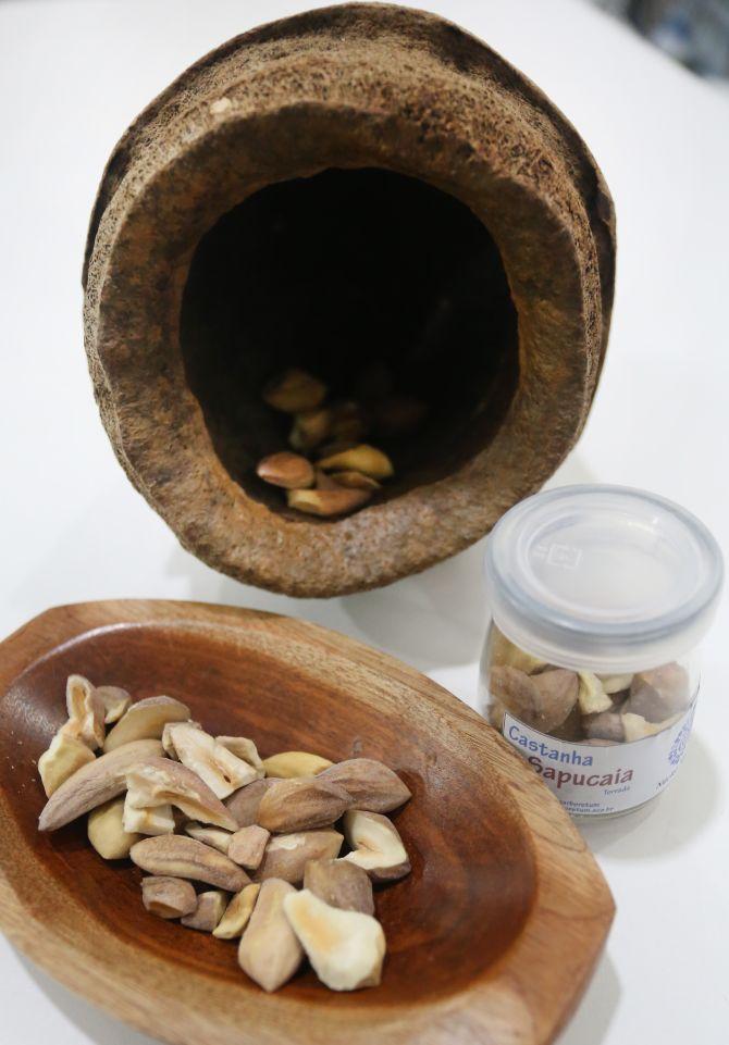 Cada quilo de coco, ou ouriço, chega a ter 180 castanhas em seu interior. Foto: Divulgação Ana Nascimento / SFB