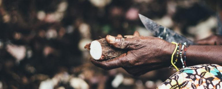 """A atenção de chefs como Alex Atala se volta aos usos da mandioca como ingrediente por populações originárias em receitas """"pré-Cabralinas"""". Foto: Annie Spratt/Unsplash"""