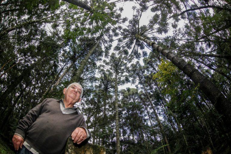 """Marco Mazzarotto, tem 71 anos e é um """"guardião das araucárias"""". Ele reflorestou uma área em Curitiba e segue trabalhando para proteger esse espaço. Foto: Jonathan Campos / Gazeta do Povo."""