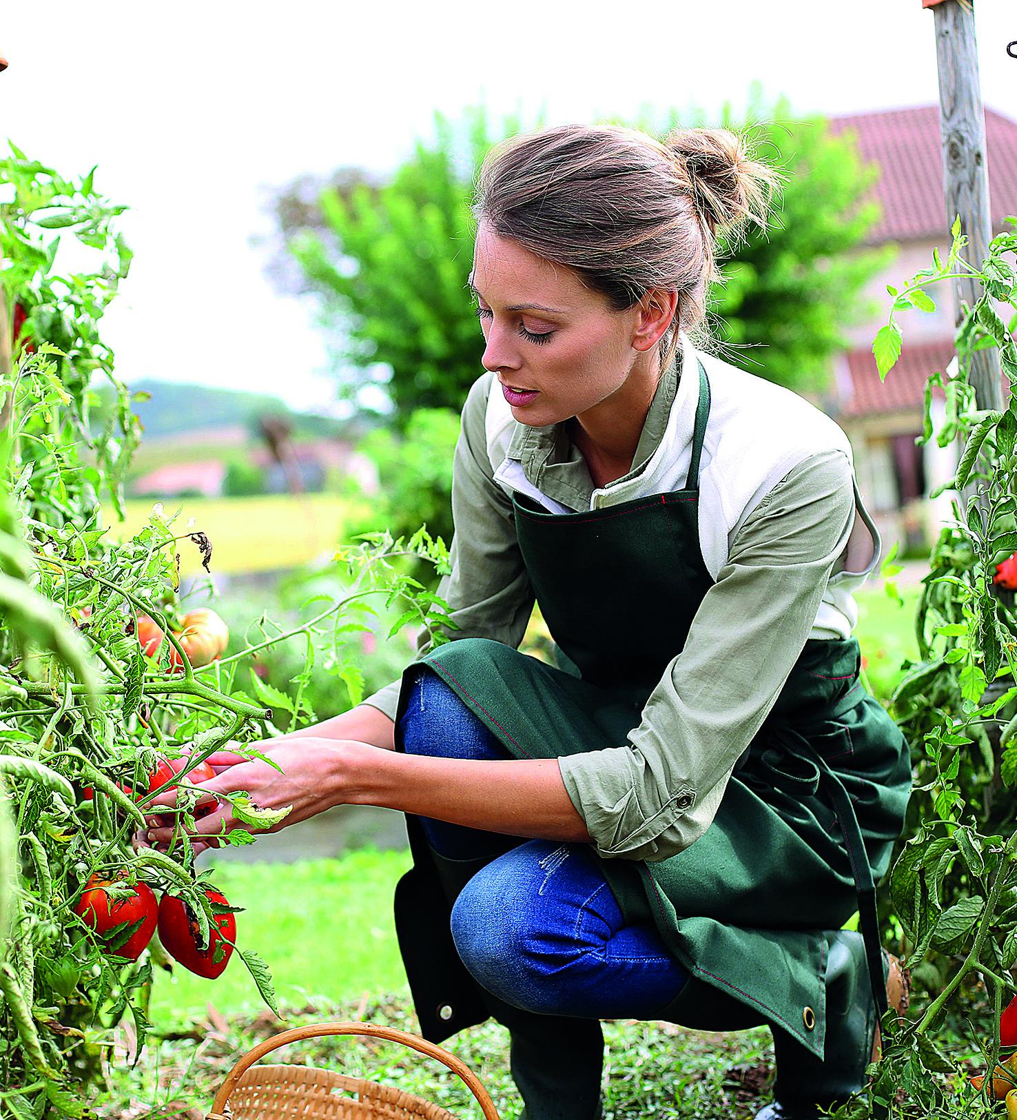 Destaques do final de semana incluem vivência de agricultura urbana. Fotos: Bigstock