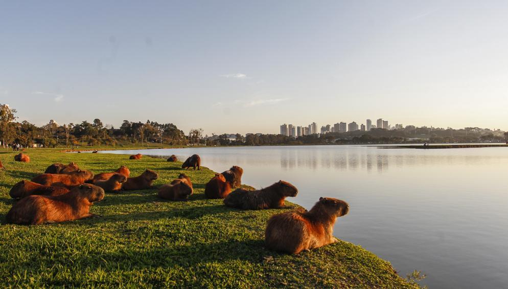 Parque Barigui deve sua existência à coragem do Ippuc da época, composto por aproximadamente 15 pessoas. Fotos: Daniel Castellano / Gazeta do Povo.