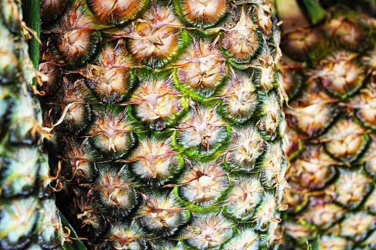 Couro extraído do abacaxi é alternativa viável para substituir couro animal. Foto: Greg Montani/Pixabay/Divulgação