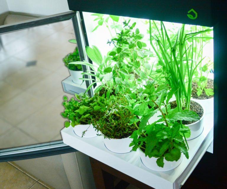 Eletrodoméstico permite cultivo de horta dentro de casa