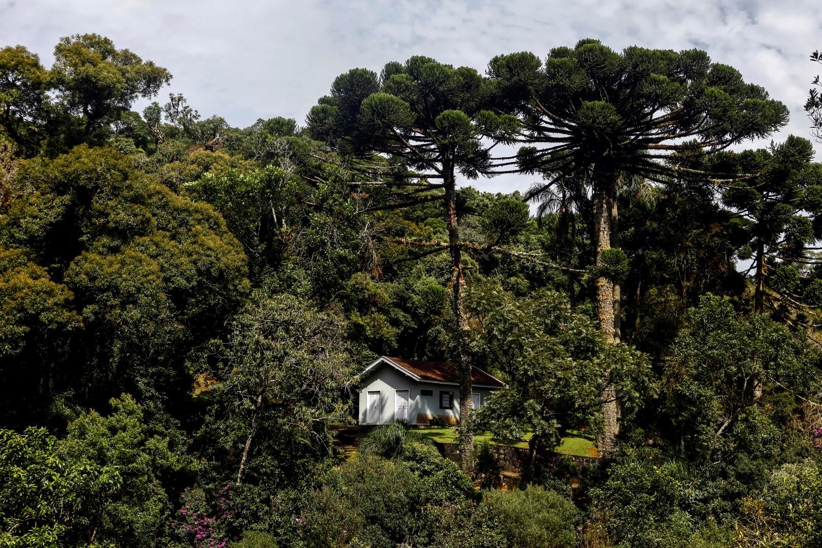 Além de conhecer a centenária construção, visitar os Mananciais da Serra  é uma oportunidade de se conectar com a natureza.