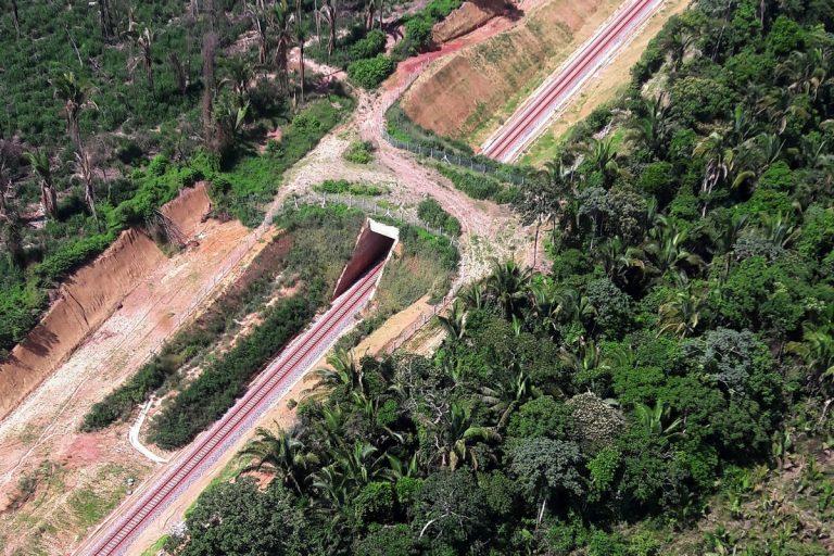 Instalado no Pará, o primeiro viaduto de fauna do Brasil vai contribuir para a redução dos atropelamentos de animais silvestres e ainda para a recuperação da vegetação nativa à beira da ferrovia. Foto: Ibama/Divulgação