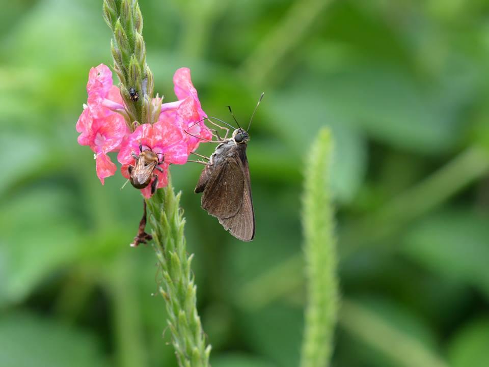 Usando borboletas e abelhas, cidade da Costa Rica lança novo conceito de urbanismo