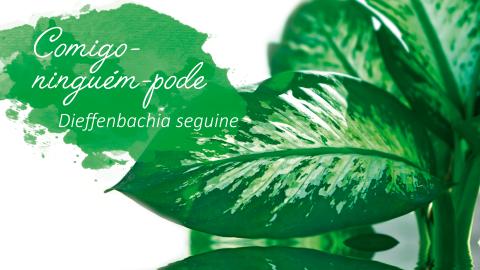 Dez plantas com nomes curiosos e seu significado