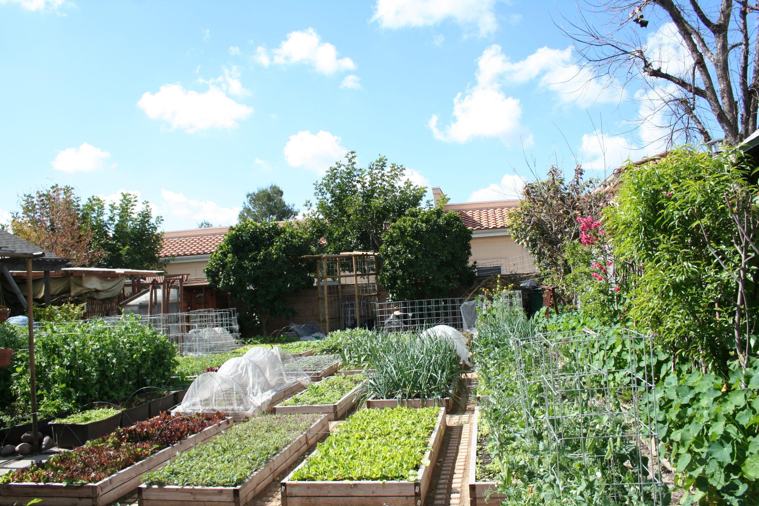 Casa da família  Dervaes em Los Angeles: jardim é um grande canteiro para o cultivo de vegetais.  Foto: The Urban Homesteaders / Divulgação