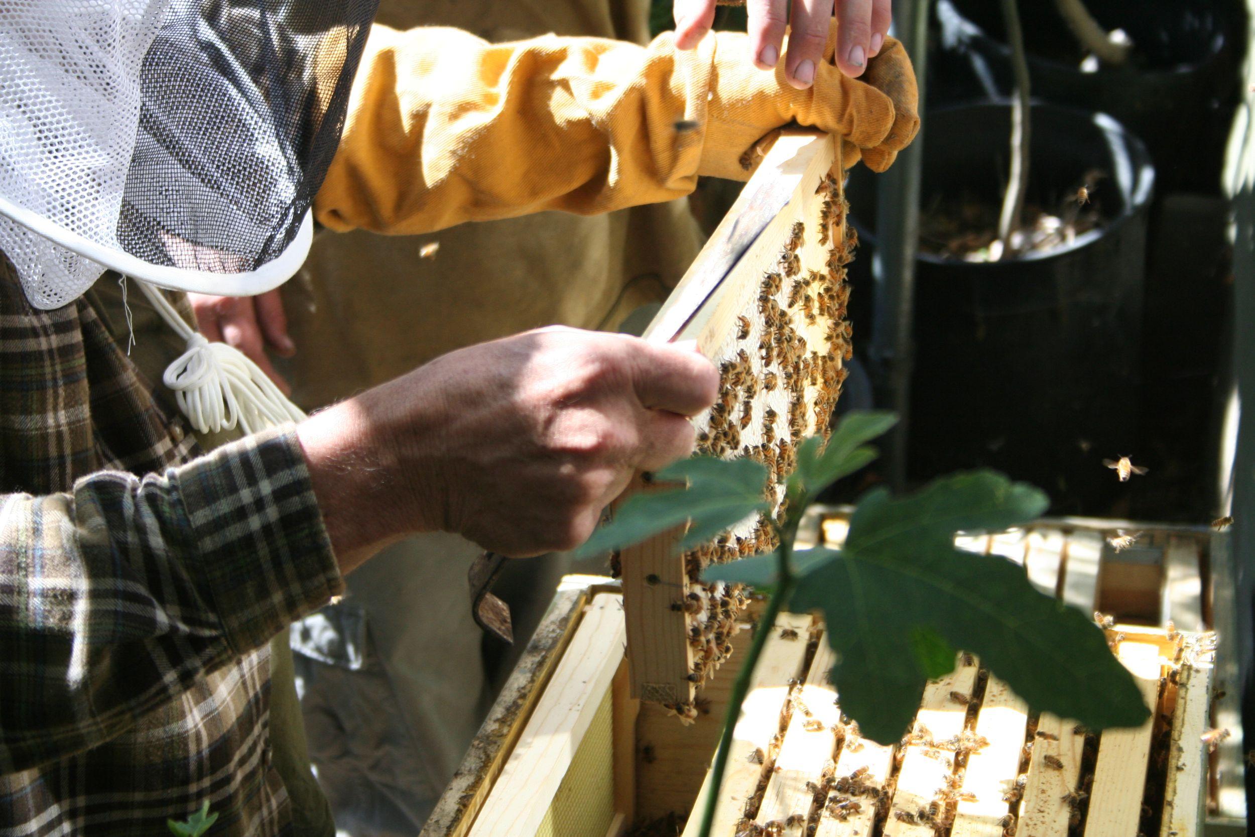 Além dos vegetais e frutas, há produção de mel.  Foto: The Urban Homesteaders / Divulgação
