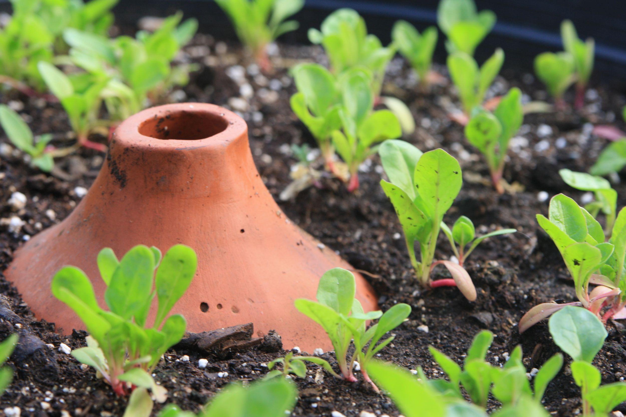 Sistema de irrigação artesanal.  Foto: The Urban Homesteaders / Divulgação