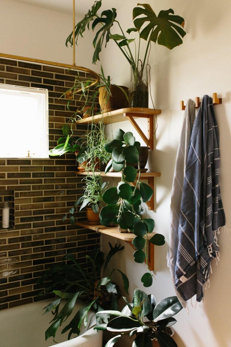 As espécies que se dão bem no banheiro são as que gostam de bastante umidade e luz indireta. Foto: Reprodução/Pinterest