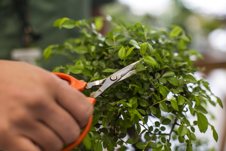 Aproveite o inverno e faça poda nas suas plantas: o cuidado é obrigatório para uma florescência exuberante na próxima estação. Foto: Brunno Covello/Gazeta do Povo