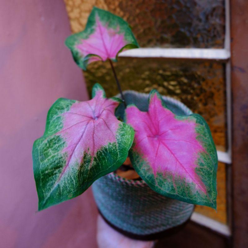 8 plantas com formatos fofinhos para decorar sua casa