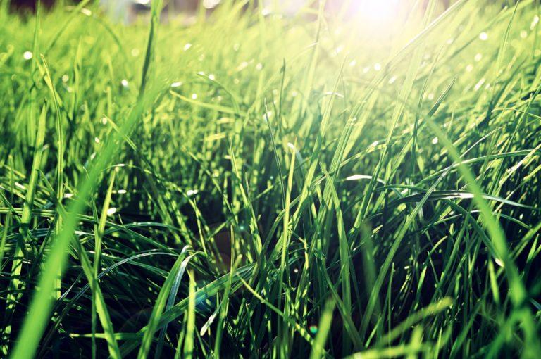 Manutenção em dia é a chave para um gramado verde e bem cuidado. Foto: Bigstock