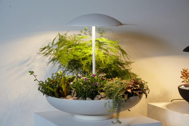 Dois em um: abajur com minijardim leva a natureza para dentro de casa de forma inusitada. Foto: Divulgação