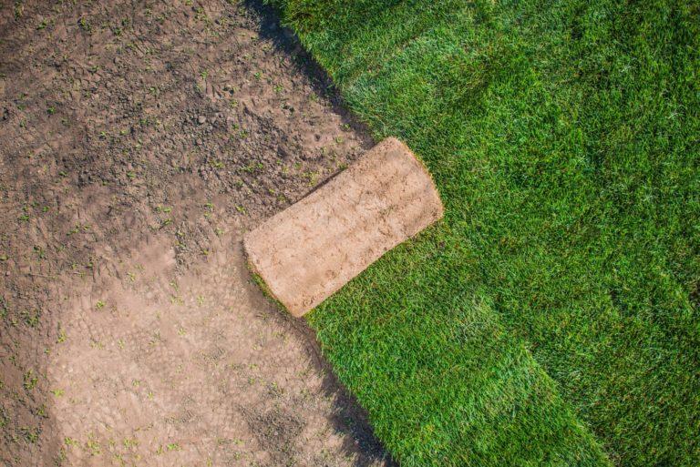 Dependendo das condições de exposição ao sol ou do solo, há espécies que se adaptam melhor. Entenda a melhor espécie para o seu jardim. Foto: Bigstock