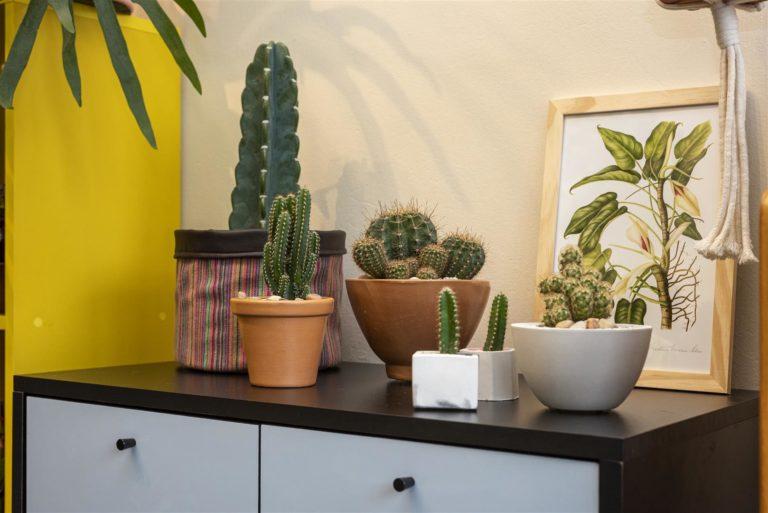Os cactos são fáceis de serem cuidados e proporcionam um ótimo efeito de decoração. Ambientação feita na Verdifique Plantas para Interiores. Foto: Fernando Zequinão / Gazeta do Povo