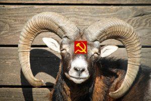 Socialistas são como cornos mansos?