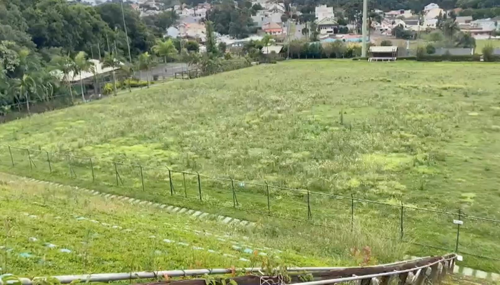 Mato tomou conta do gramado do estádio. Reprodução
