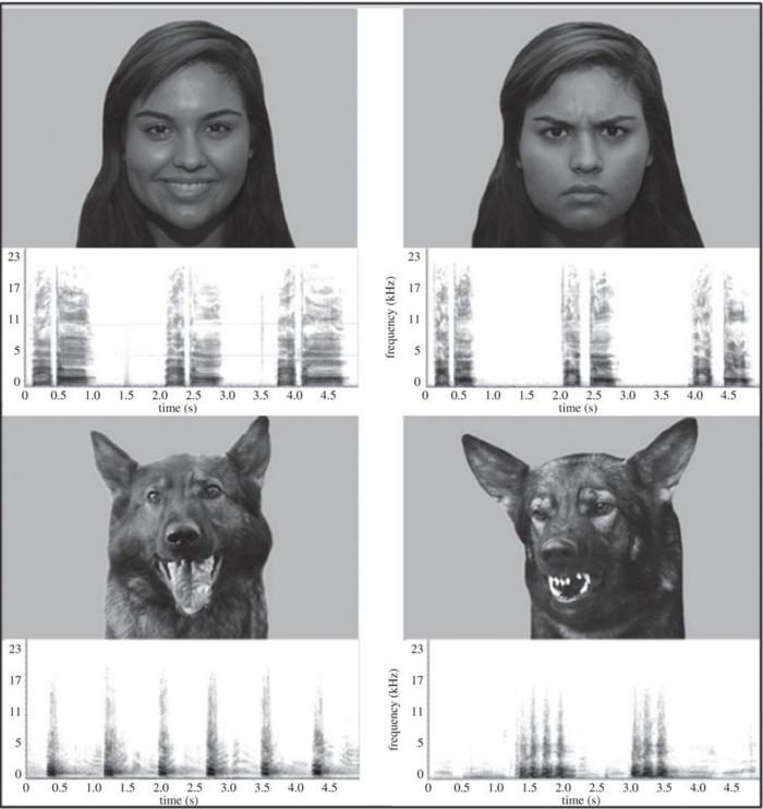 Cães são capazes de reconhecer emoções humanas, indica estudo