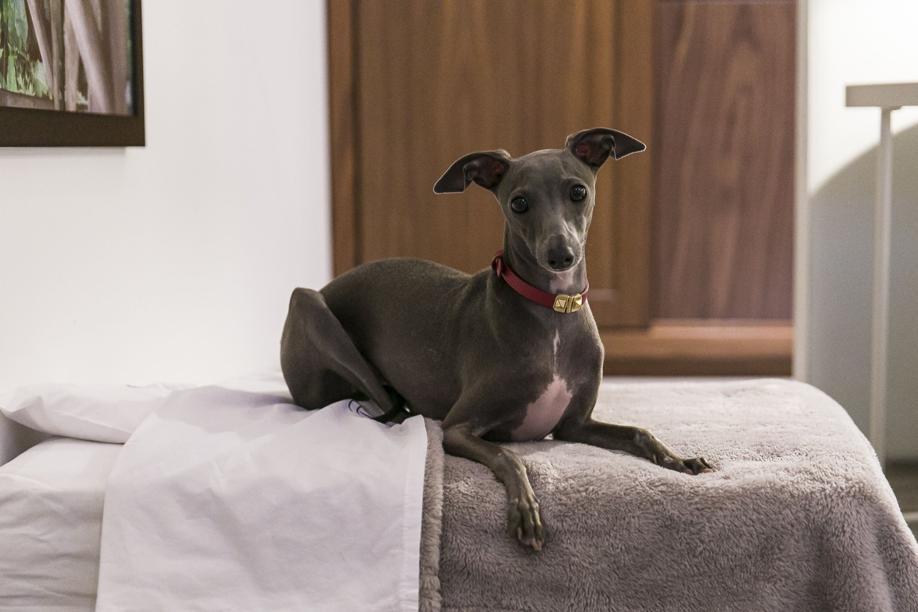 Pet friendly: o hotel recebe pets de até 15 quilos, como a bela Tarsila.