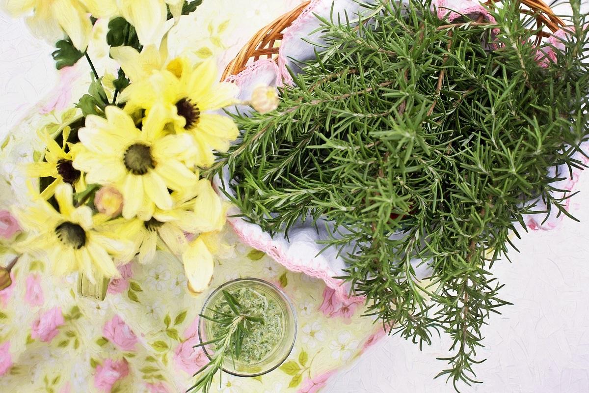 3 plantas que podem trazer bem-estar e energia ao corpo
