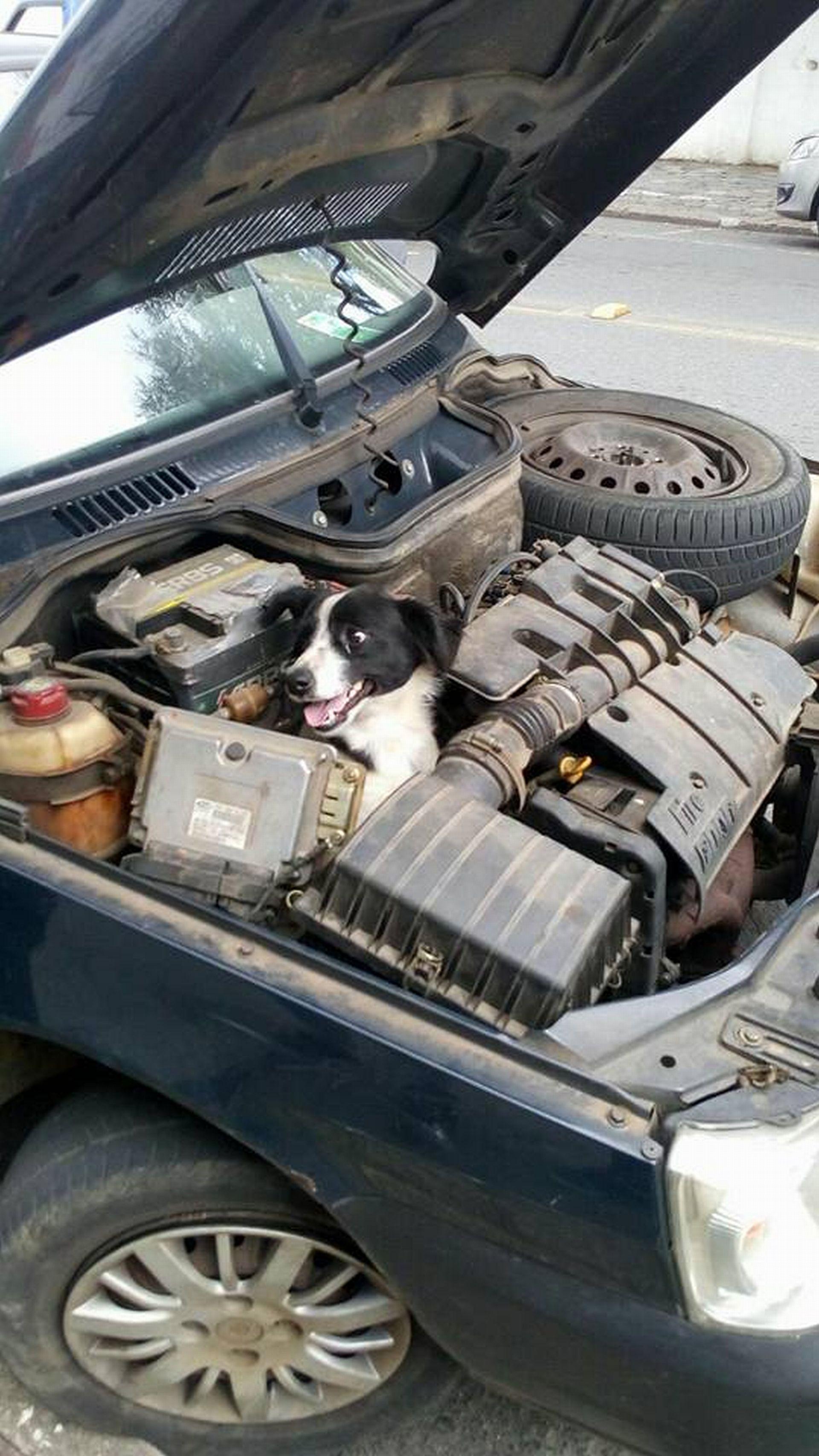 Motorista leva um susto ao encontrar cachorro em motor de carro, em Campo Largo