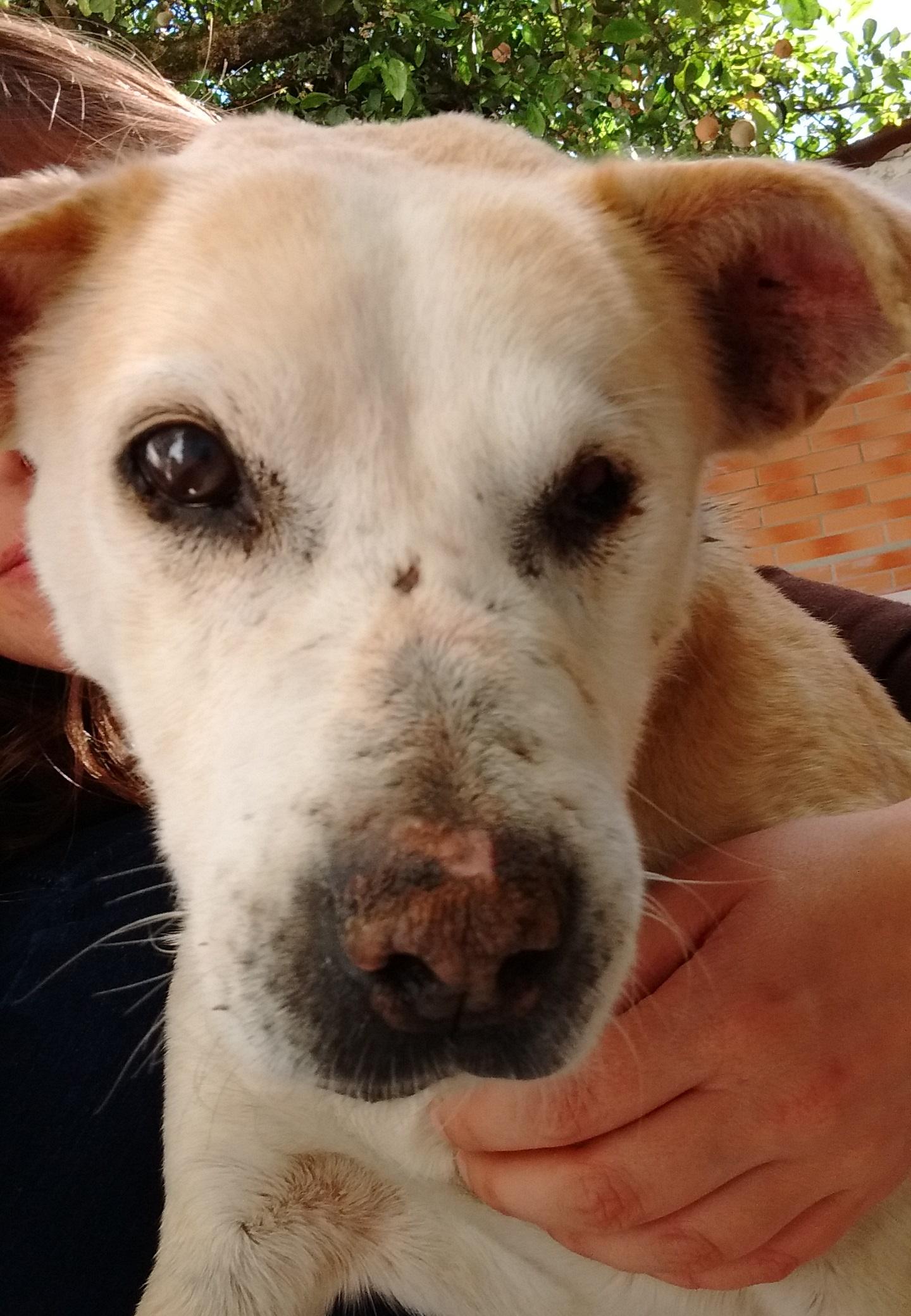 Dog Velho estava tão machucado quando Amanda o encontrou que demorou mais de um mês para confiar nela | Foto: Arquivo pessoal