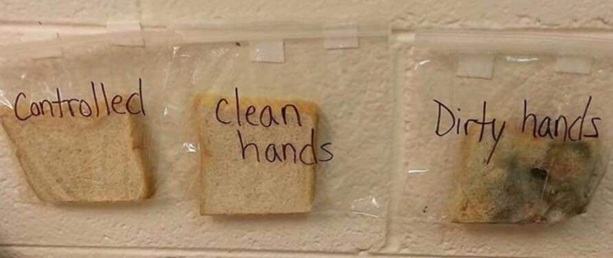 O que aconteceu com os pães que foram manuseados com as mãos limpas e sujas. Foto: arquivo pessoal