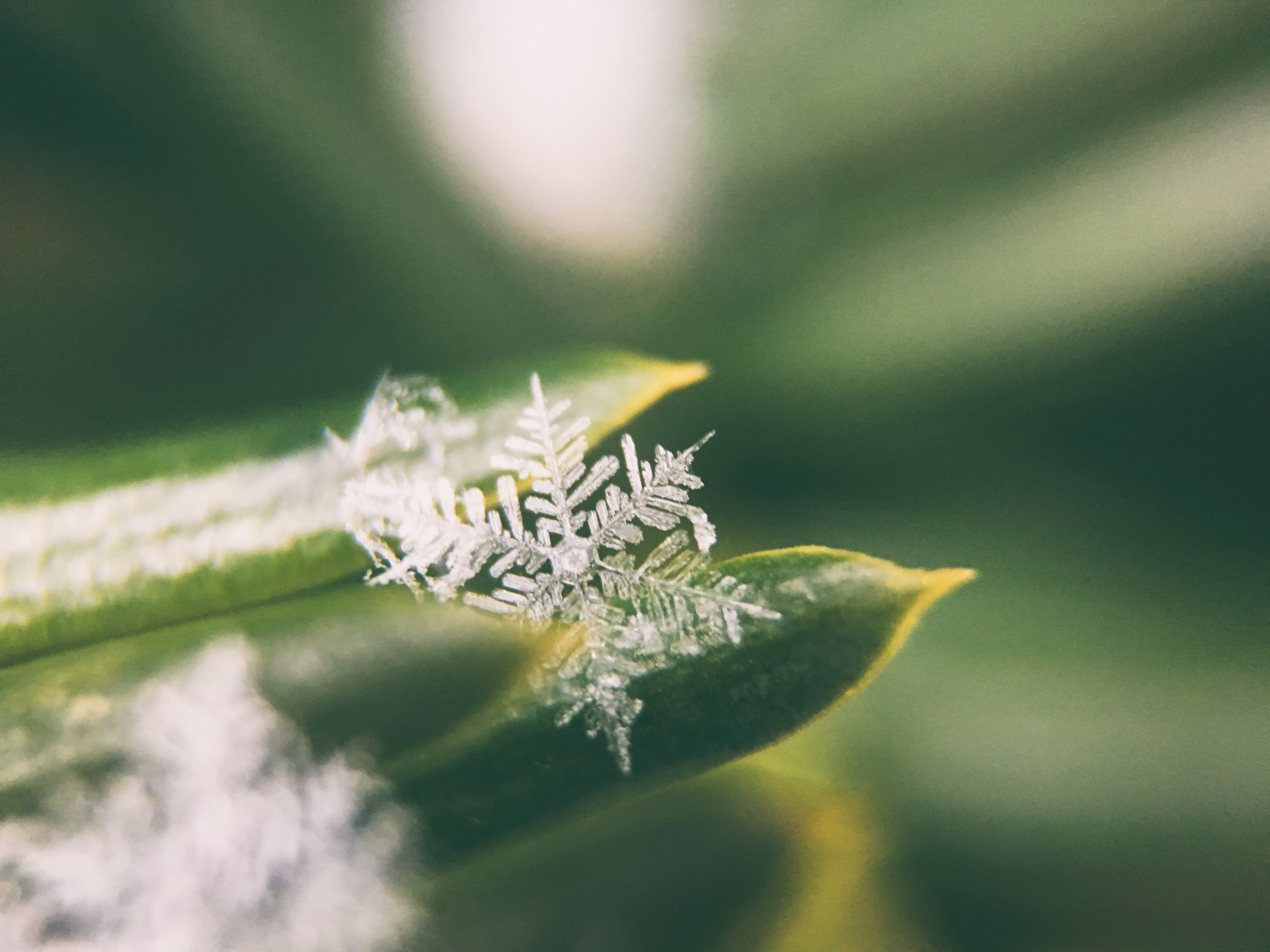 Alguns jovens adultos desta geração ganharam este apelido: lindos, porém frágeis como flocos de neve. Foto: Unsplash