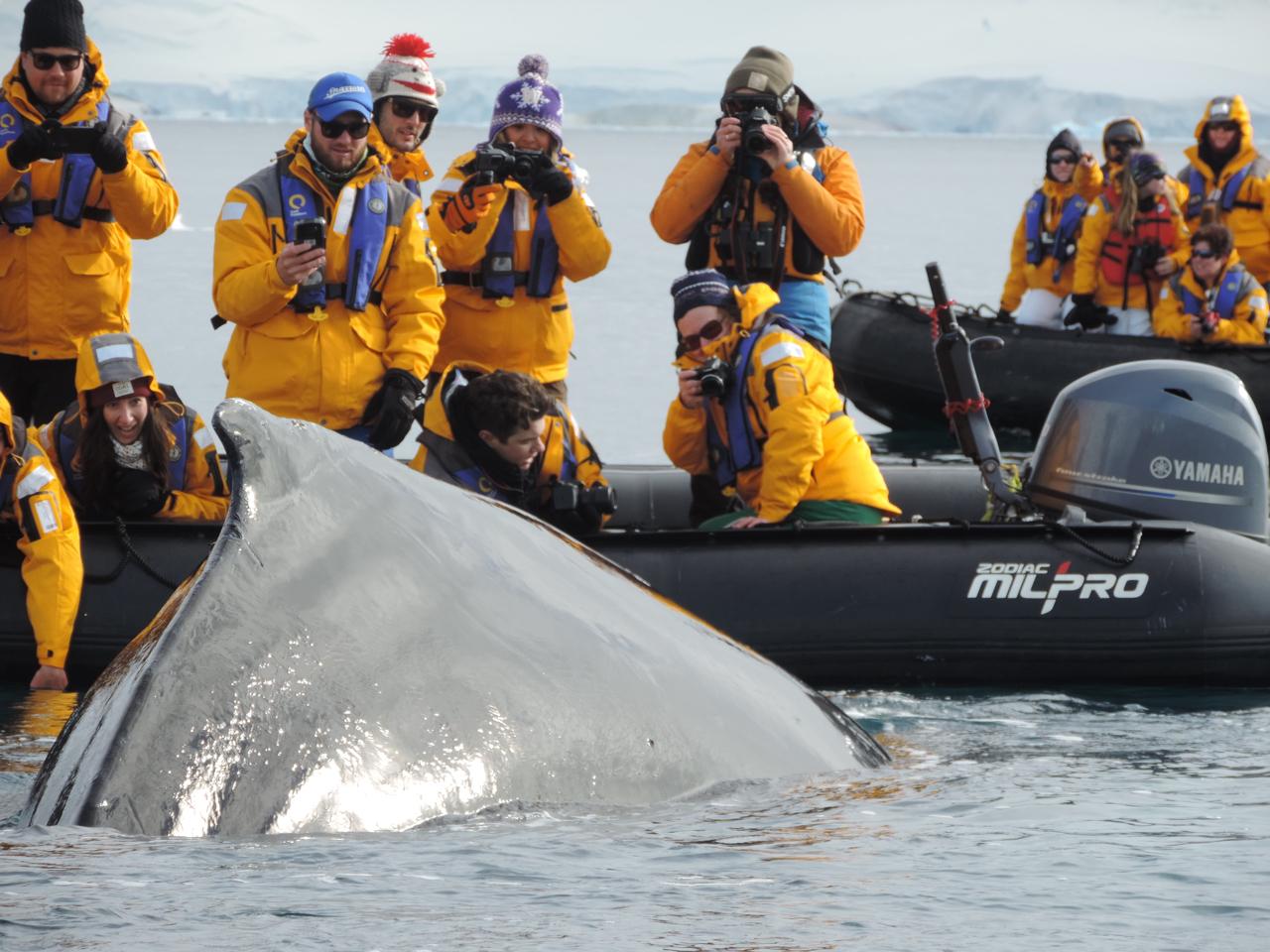 Viajantes fotografam uma baleia que passa pertinho do barco inflável. Foto: Divulgação