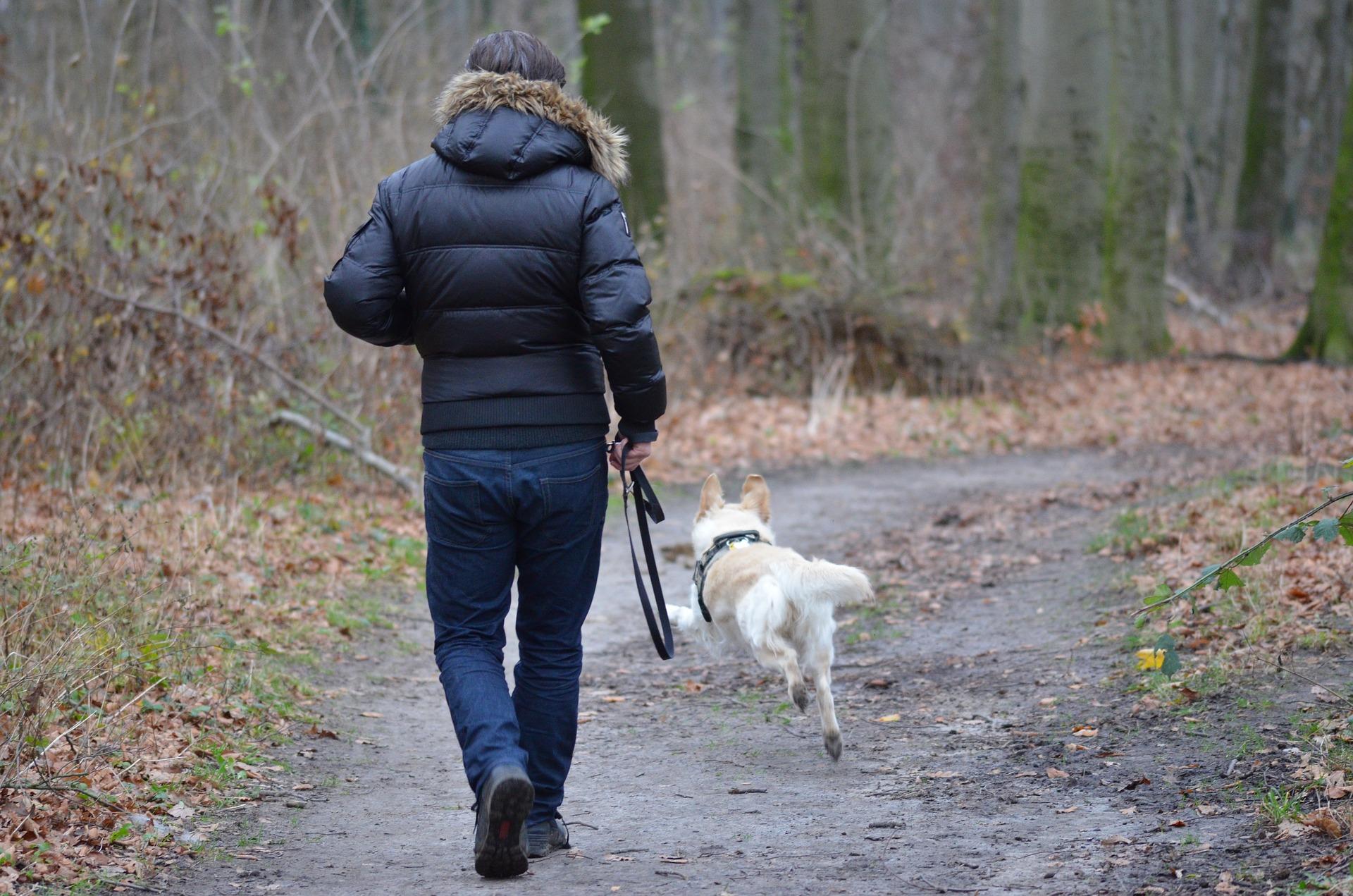 Treinar sinais sonoros, como assobios, são muito importantes na hora do passeio com seu cão. Foto: Pixabay