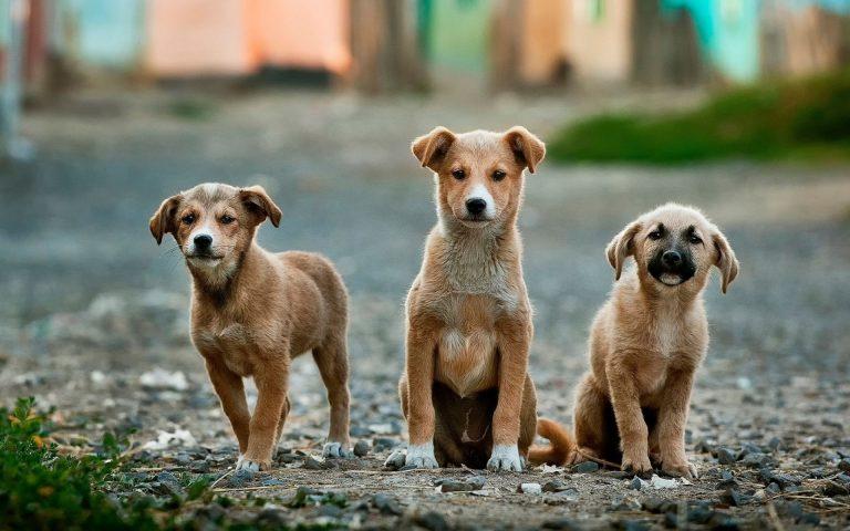 Campanha da ONG Fica Comigo quer incentivar adoção de cães abandonados. Foto: Unsplash.