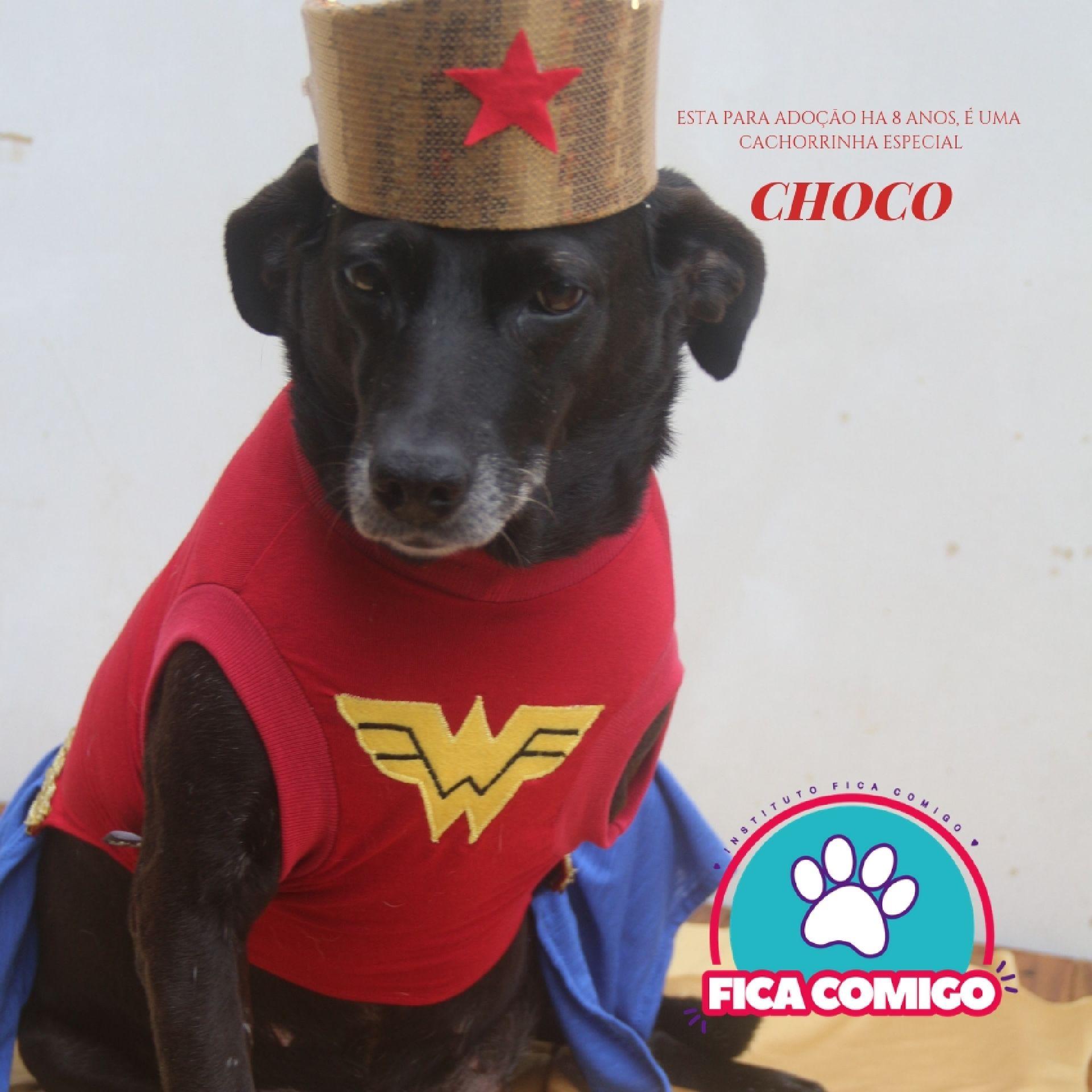 Choco é uma das cachorrinhas que estarão no facebook do Instituto Fica Comigo para adoção. Foto: Divulgação