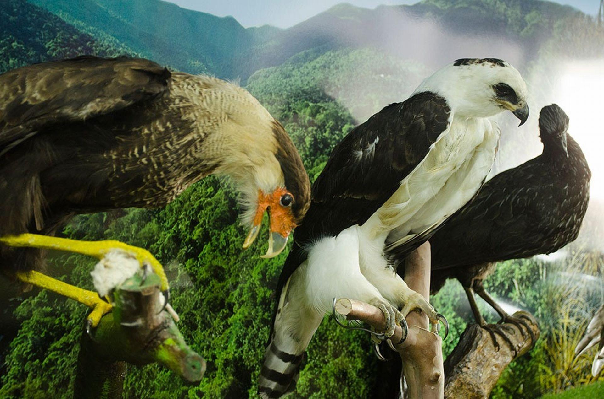 Mais de 60 espécies estão disponíveis para visitação no tour gratuito. Foto: divulgação.