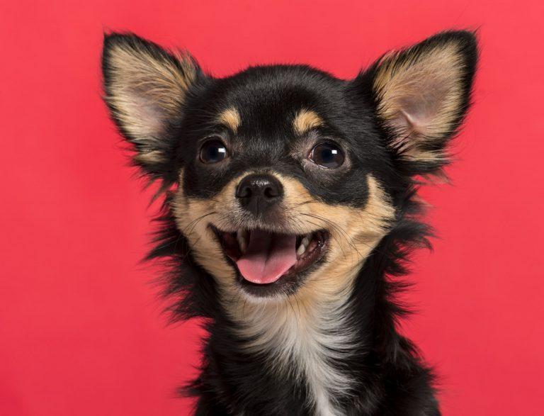 Conheça os 20 finalistas no Cachorro do Ano e vote no seu favorito