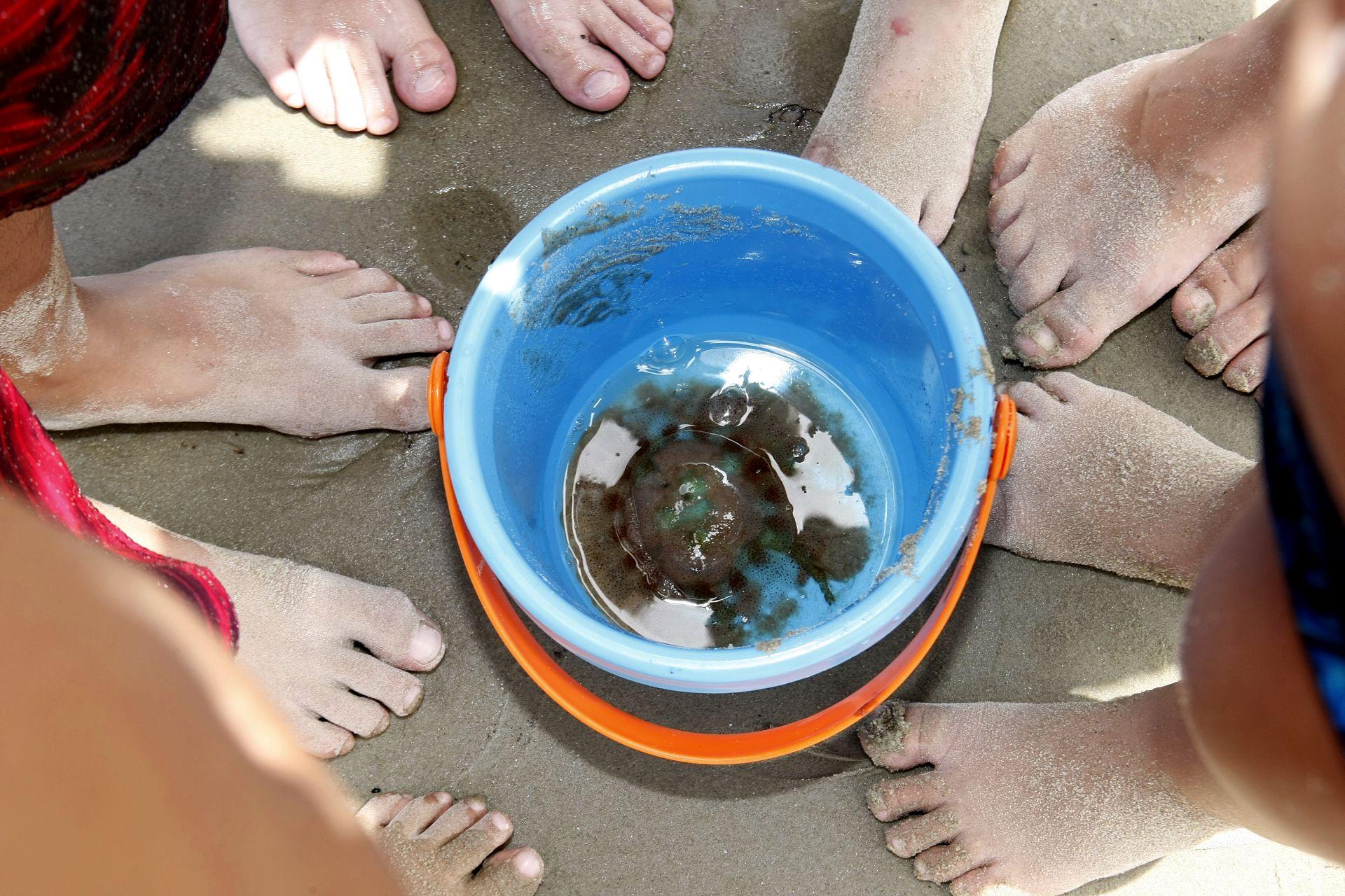 Nunca mexa com a água-viva encontrada na praia. Risco de acidentes aumentam no verão (Foto: Hugo Harada/ Gazeta do Povo / Arquivo)