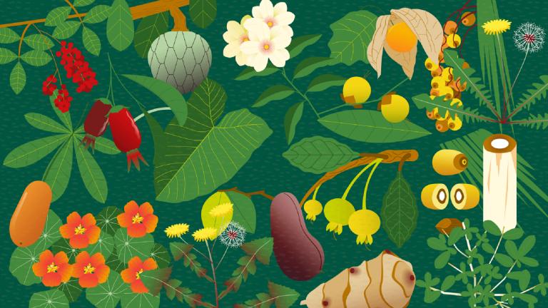 As plantas e frutos brasileiros têm aspecto nutricional excelente e devem ser incluídos no cardápio diário. Foto: Bigstock.