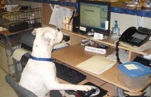Já pensou em levar seu pet para o trabalho?