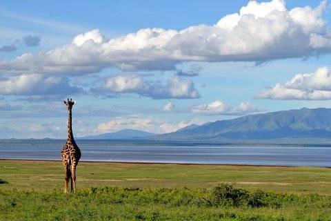 Tanzânia: overdose de vida selvagem