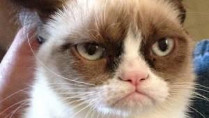 Grumpy Cat, fofinho e zangado
